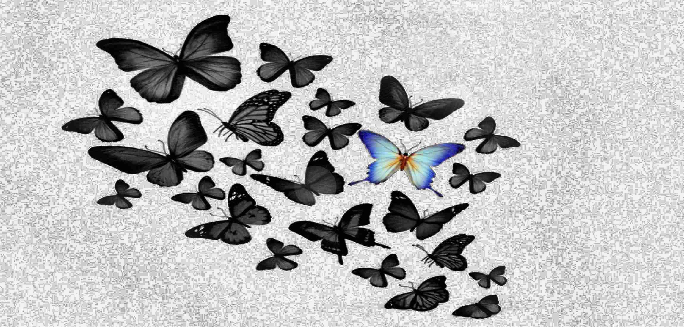 Vlinders symbolisen het doel van deze website.
