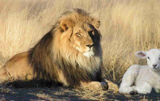 De leeuw en het lam symboliseren strijden voor geestelijk leven