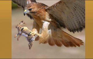 Wreedheid in de natuur