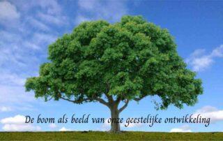 De boom als beeld van onze geestelijke ontwkkeling